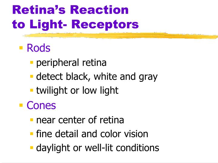 Retina's Reaction        to Light- Receptors