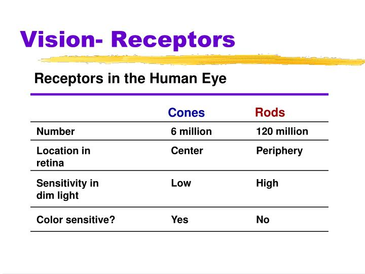 Receptors in the Human Eye