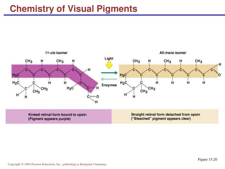 Chemistry of Visual Pigments
