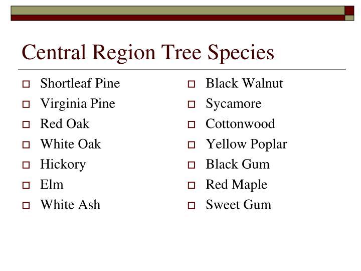 Shortleaf Pine