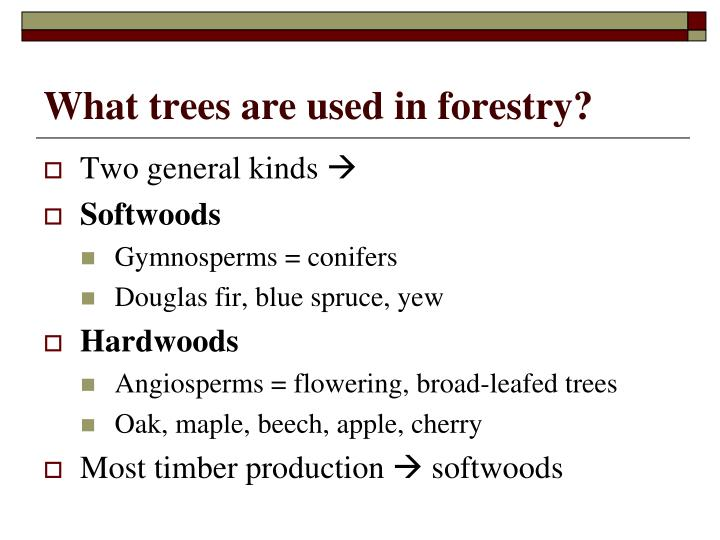 What trees are used in forestry?