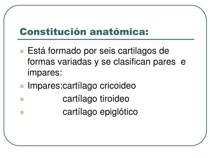 Constitución anatómica: