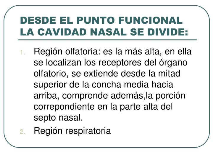 DESDE EL PUNTO FUNCIONAL LA CAVIDAD NASAL SE DIVIDE: