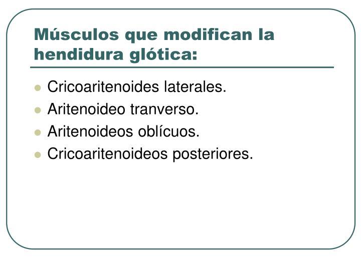 Músculos que modifican la hendidura glótica: