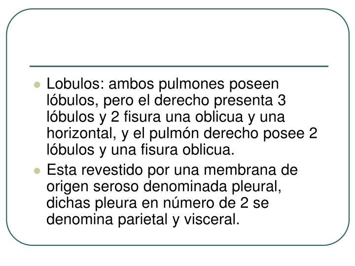 Lobulos: ambos pulmones poseen lóbulos, pero el derecho presenta 3 lóbulos y 2 fisura una oblicua y una horizontal, y el pulmón derecho posee 2 lóbulos y una fisura oblicua.