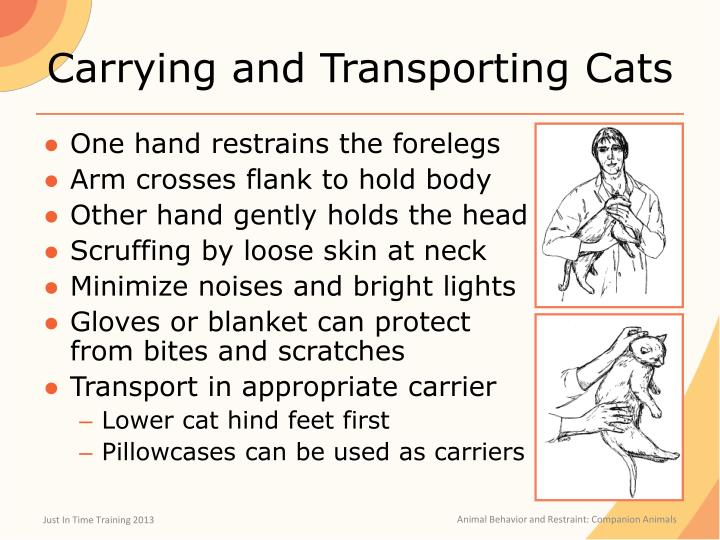 Carrying and Transporting Cats