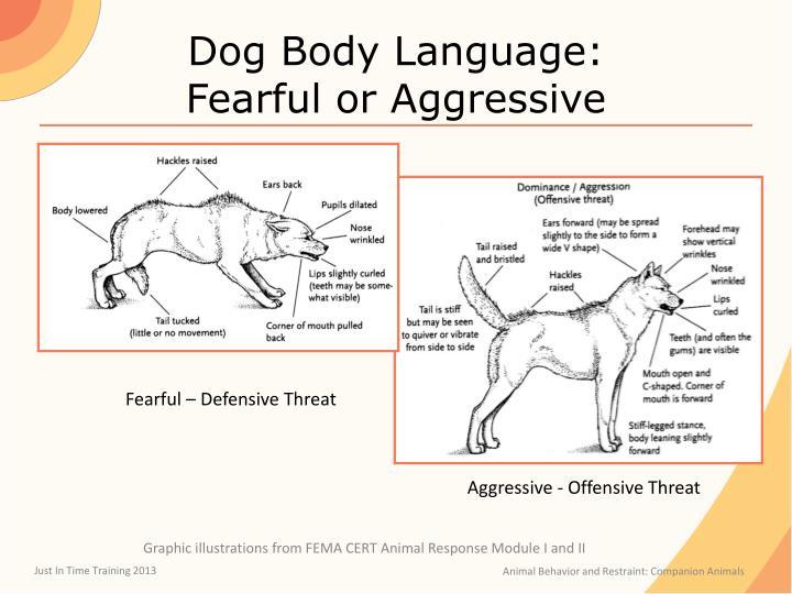 Dog Body Language: