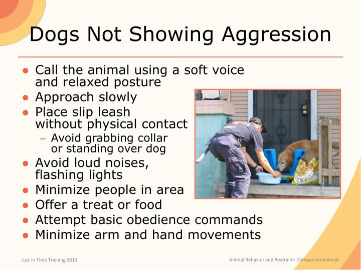 Dogs Not Showing Aggression