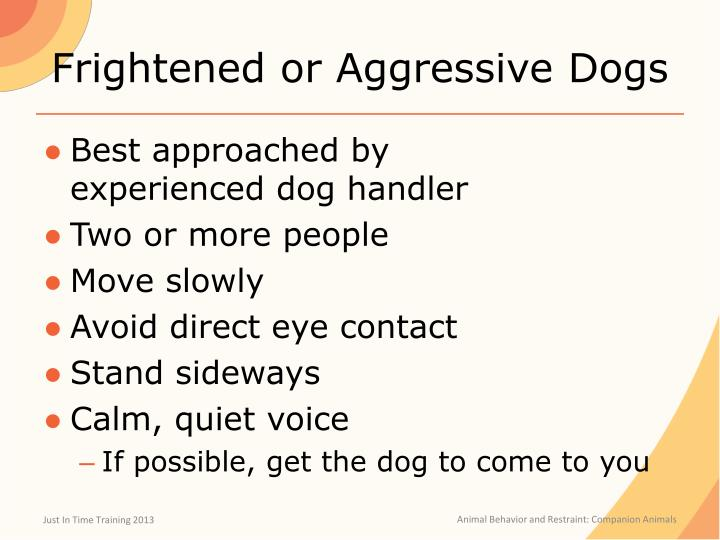 Frightened or Aggressive Dogs