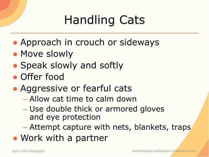 Handling Cats