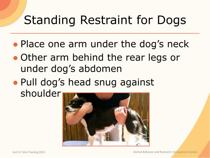 Standing Restraint for Dogs