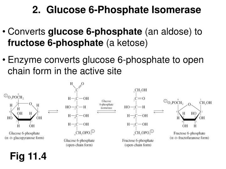 2.  Glucose 6-Phosphate Isomerase