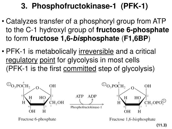 3.  Phosphofructokinase-1  (PFK-1)