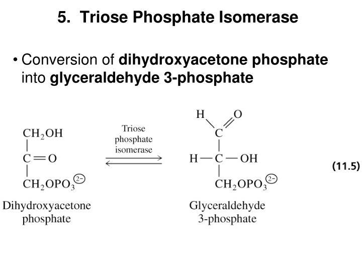 5.  Triose Phosphate Isomerase