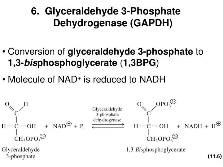6.  Glyceraldehyde 3-Phosphate Dehydrogenase (GAPDH)