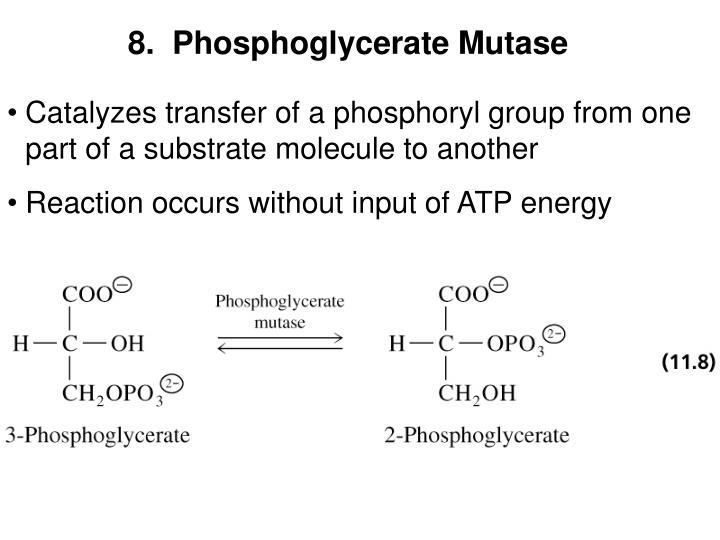 8.  Phosphoglycerate Mutase