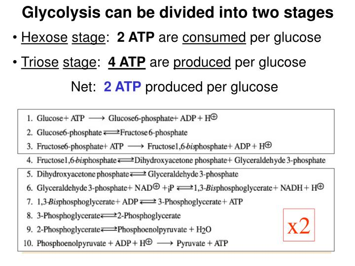 Glycolysis can be divided into two stages