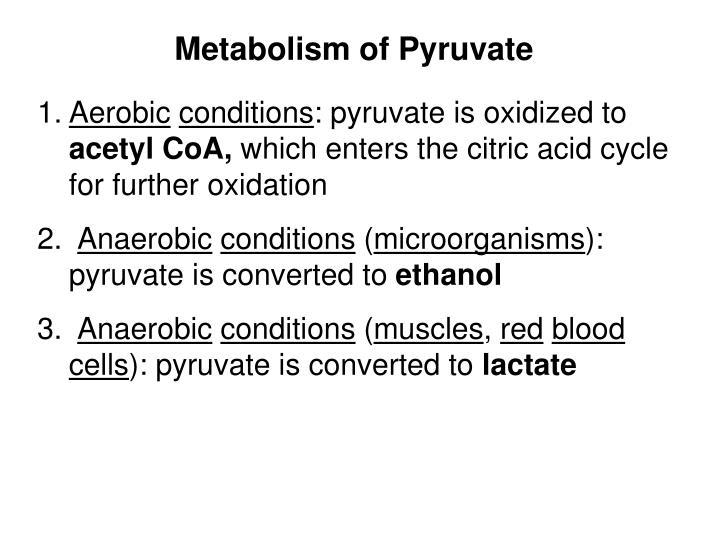 Metabolism of Pyruvate
