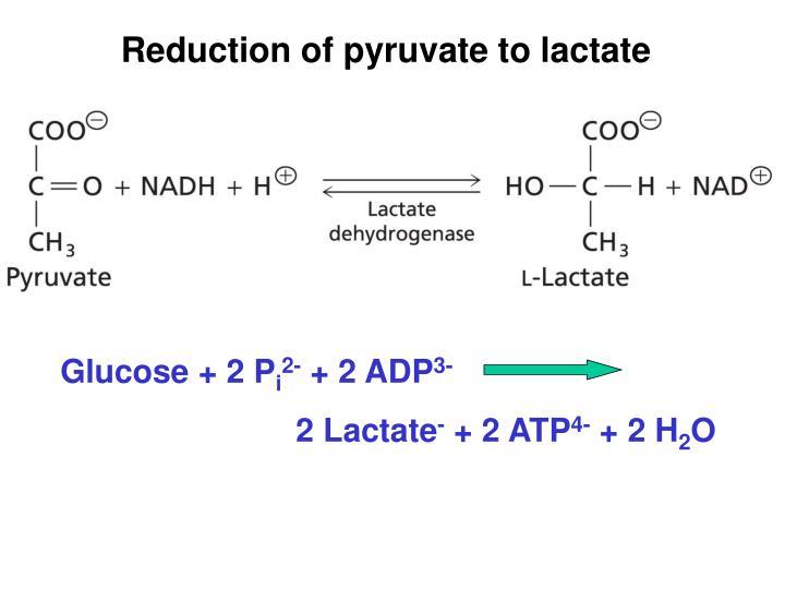 Glucose + 2 P