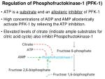 regulation of phosphofructokinase 1 pfk 1