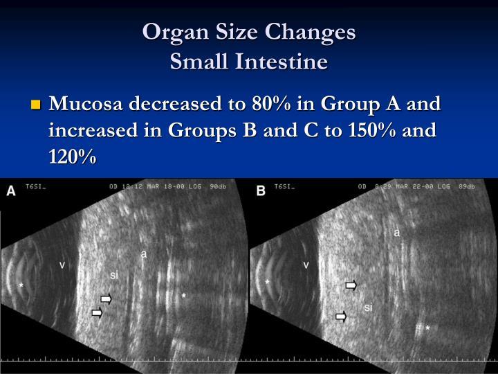 Organ Size Changes