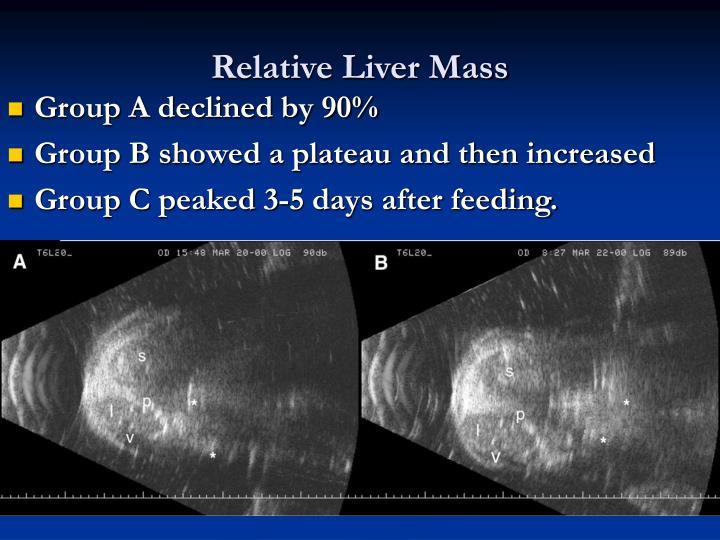 Relative Liver Mass