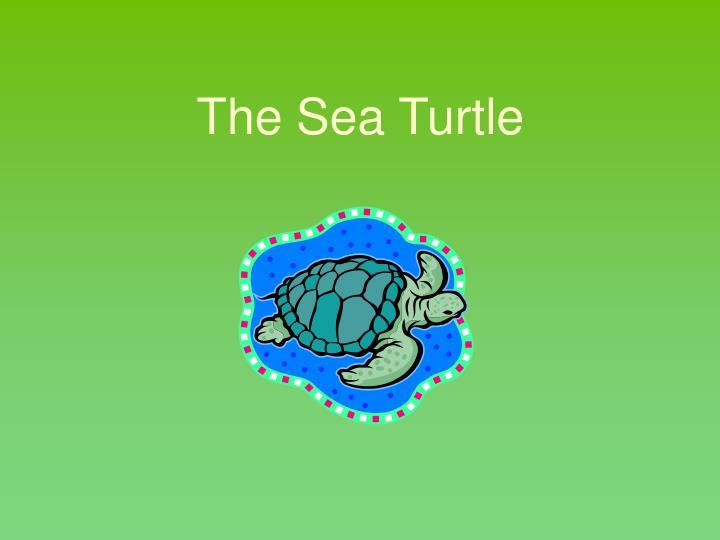 The Sea Turtle