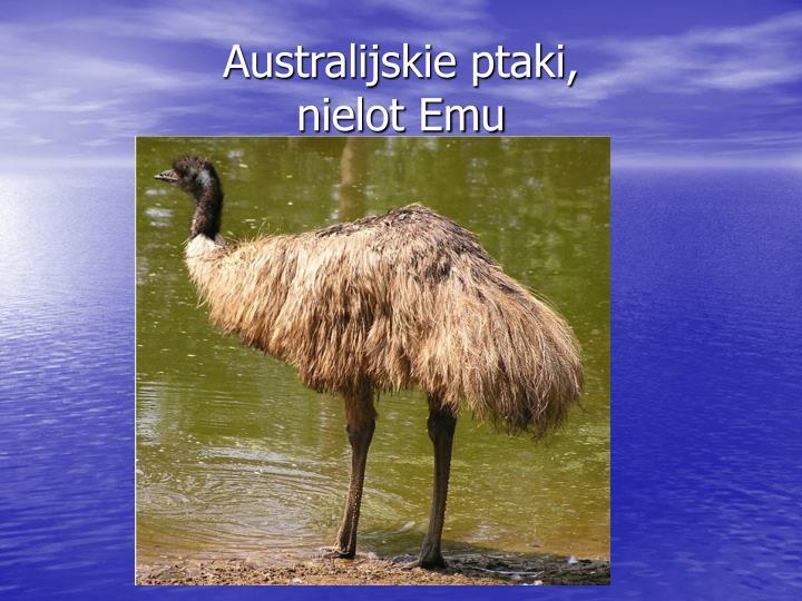Australijskie ptaki,