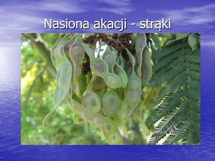 Nasiona akacji - strąki