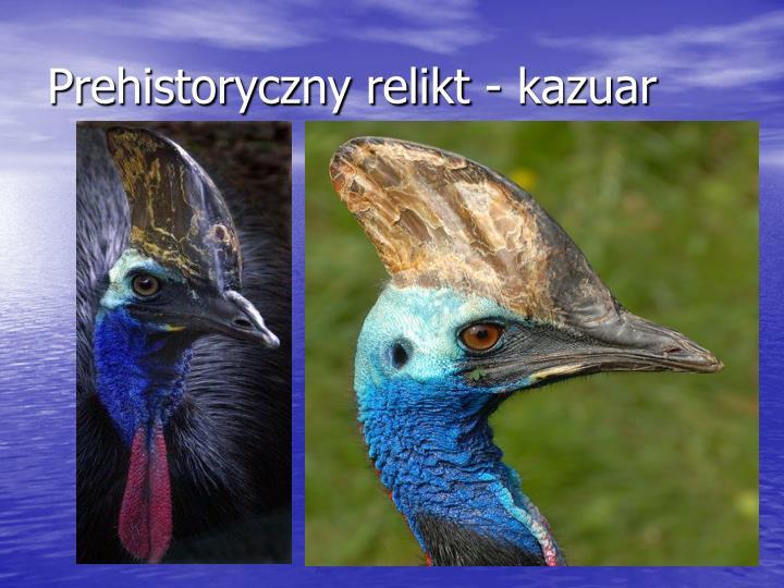 Prehistoryczny relikt - kazuar