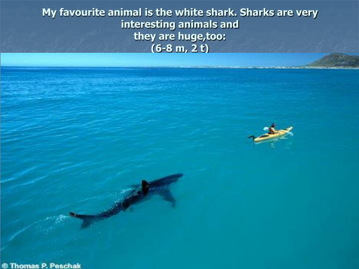 My favourite animal is the white shark. Sharks are very interesting animals and