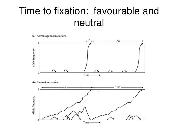Time to fixation:  favourable and neutral