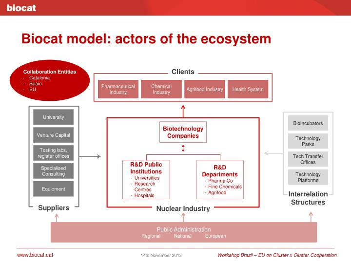Biocat model: actors of the ecosystem