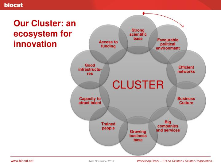 Our Cluster: an ecosystem for innovation