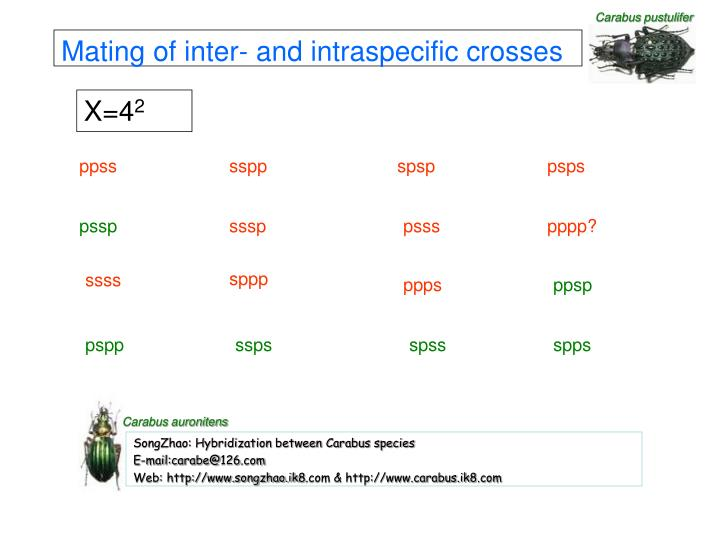 Mating of inter- and intraspecific crosses