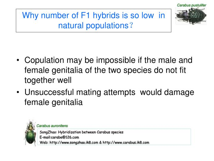 Why number of F1 hybrids is so low  in natural populations