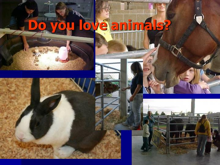 Do you love animals?