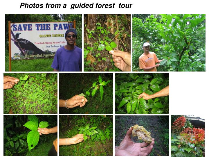 Photos from a  guided forest  tour