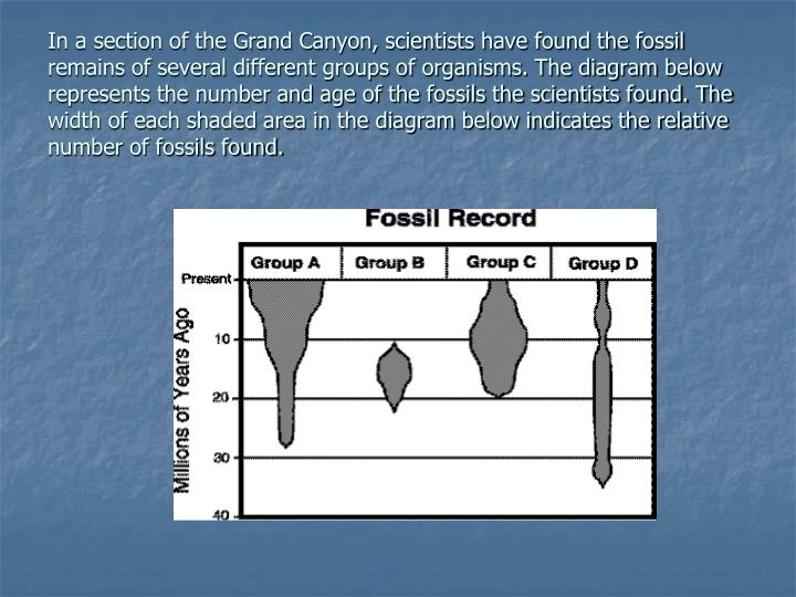 In a section of the Grand Canyon, scientists have found the fossil remains of several different groups of organisms. The diagram below represents the number and age of the fossils the scientists found. The width of each shaded area in the diagram below indicates the relative number of fossils found.
