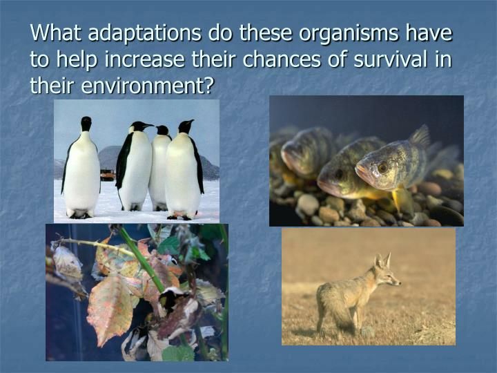 What adaptations do these organisms have to help increase their chances of survival in their environment?
