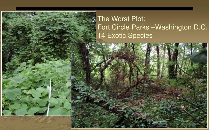 The Worst Plot: