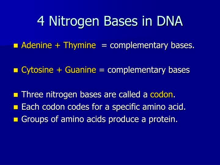 4 Nitrogen Bases in DNA