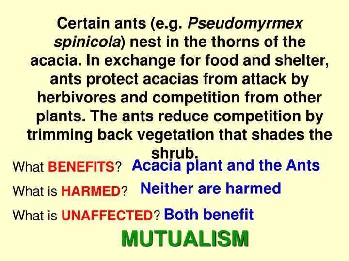 Certain ants (e.g.
