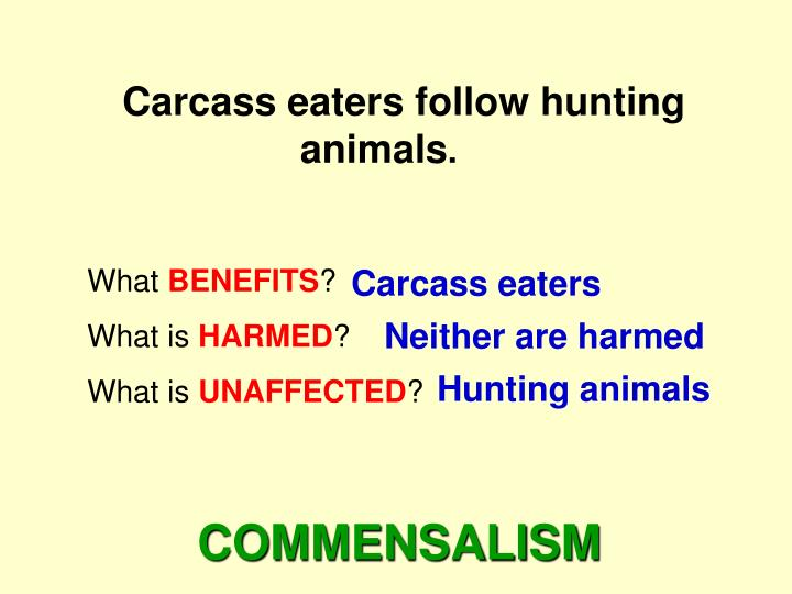 Carcass eaters follow hunting animals