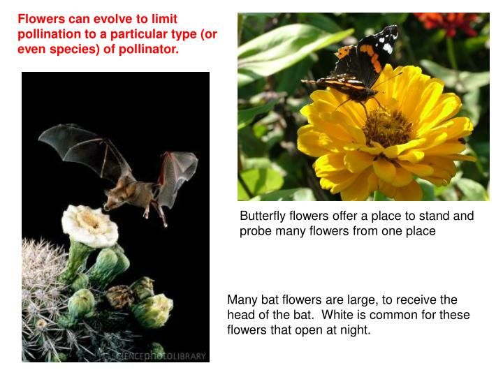 Flowers can evolve to limit pollination to a particular type (or even species) of pollinator.