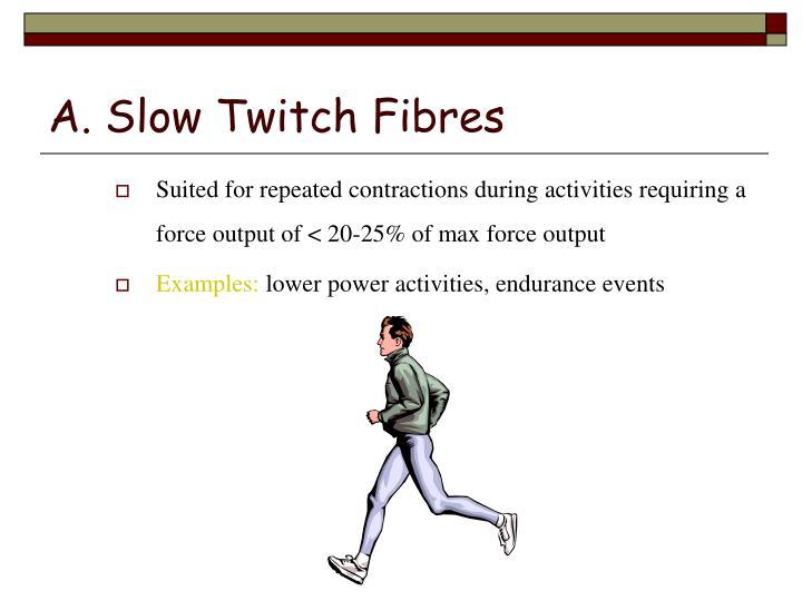 A. Slow Twitch Fibres