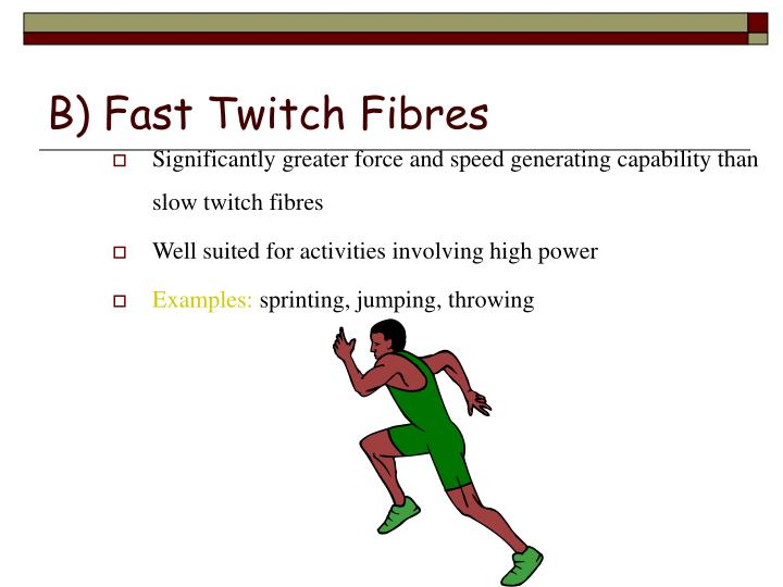 B) Fast Twitch Fibres