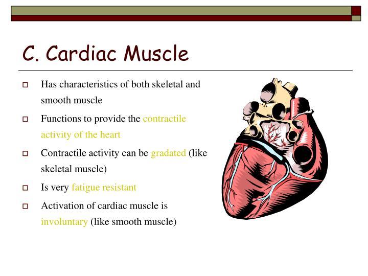 C. Cardiac Muscle