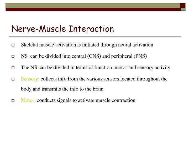 Nerve-Muscle Interaction