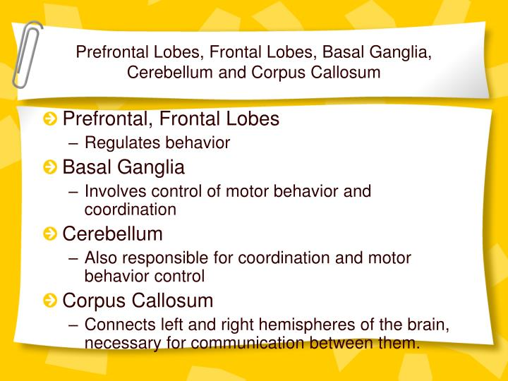 Prefrontal Lobes, Frontal Lobes, Basal Ganglia, Cerebellum and Corpus Callosum